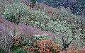 Árbores no inverno. Canón do Mao. - panoramio.jpg