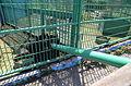 Бердянский зоопарк 028.jpg