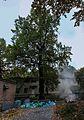 Віковий дуб-красень IMG 2204 stitch.jpg
