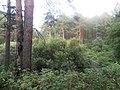 Гилевская роща. Река Ключи (Войновка) 07.JPG