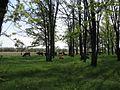 Дендрологічний парк 188.jpg
