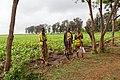 Женщины на плантации кукурузы.jpg