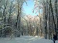 Зимові стежки Феофанії.jpg