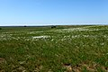 Ковыль в степи. Вид в северном направлении - panoramio.jpg