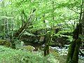 Кostina river,р. Костина - panoramio (2).jpg