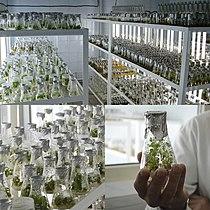 Лабораторія мікроклонального розмноження рослин.jpg