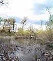 Ландшатний заказник на лівому березі озера Конча (34).jpg