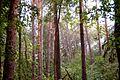 Лес после дождя.jpg