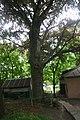 Лісове урочище Крістерів Червонолистий бук IMG 3133.jpg