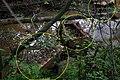 Невская Дубровка Сентябрь 2011. Загрязнение русла речки Дубровка. - panoramio (1).jpg