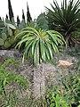 Никитский ботанический сад. Кактусовая оранжерея - panoramio (7).jpg