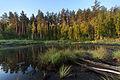 Озеро сред лісу.jpg