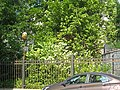 Оренбургская 4, сад02.jpg