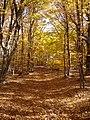 Осіння тропа в Кримському заповіднику.jpg