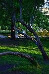 Парк имени Горького в Москве. Фото 11.jpg