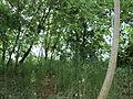 Парк шума Гази Баба во мај (8).JPG