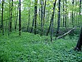 Просто лес - panoramio.jpg