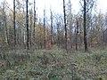Севастопольский парк осень.jpg