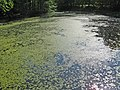Сергиевка. Оранжерейный пруд.jpg