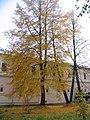 Спасо-Ефимовский монастырь Суздаль 4.jpg