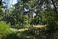 Старовинне козацьке кладовище в с. Трахтемирів (5).jpg