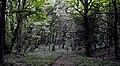 Страхи Польського лісу.jpg