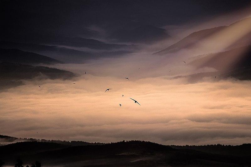 File:Сутрешна гледка от Безбог... Бързолети по изгрев слънце.jpg