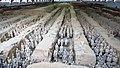 Терракотовая армия - panoramio.jpg