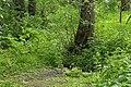 Чиста криниця (під деревом).jpg