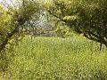 الزراعة في ضوران - panoramio.jpg