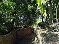 باغهای روچی - panoramio.jpg