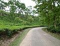 খাদিমনগর জাতীয় উদ্যান চা বাগান.jpg