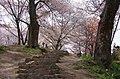 吉野山 中千本公園にて 2014.4.12 - panoramio.jpg