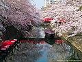 奥の細道むすびの地の春(Canal in Ogaki with Cherry blossom) 31 Mar, 2015 - panoramio.jpg
