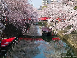 奥の細道むすびの地の春(Canal in Ogaki with Cherry blossom) 31 Mar, 2015 - panoramio.jpg