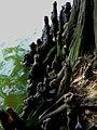 广东新淮圭峰的树笋 - panoramio.jpg