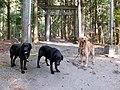 犬たち2013春 - panoramio.jpg