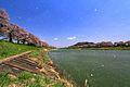 白石川 - panoramio (1).jpg