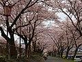 相川水辺公園、児童公園付近.jpeg
