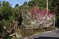 茶山道路 Chashan road - panoramio.jpg