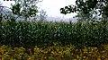 西北.商.寅.4 - panoramio.jpg