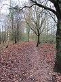 -2018-12-06 Footpath, Pigney Woods, Knapton, Norfolk (1).JPG