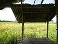 0201jfVentinilla Fields Nancamarinan Paniqui Camiling Tarlacfvf 23.JPG