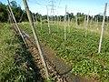 0581jfLandscapes Roads Vegetables Fields Binagbag Angat Bulacanfvf 15.JPG