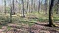 06 Grabhügelgruppe im Waldstück Hainbach.jpg