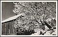 1. Vinter i Norge (15550442074).jpg