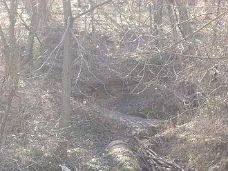 Eleven Jones Cave - Closeup of cave entrance