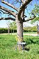 14-04-16 Zülpich Stühle 02.jpg