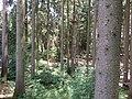 18.07.2015. Wildfreizeitpark Oberreith, 83567 Unterreit - panoramio (19).jpg