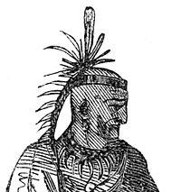 Cornstalk - Wikipedia